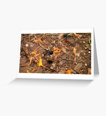 Halloween  black widow spider Greeting Card