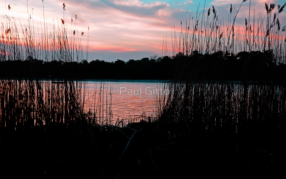 Through the Reeds by Paul Gitto