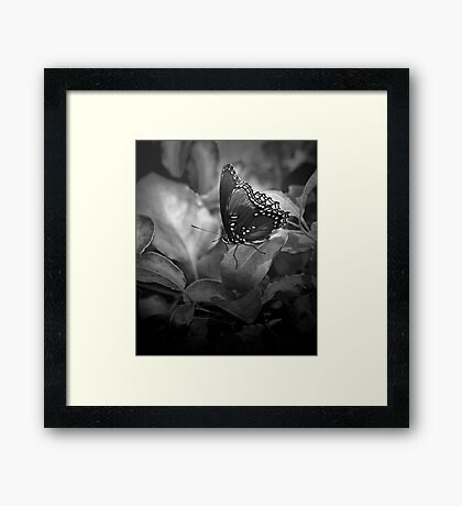Butterfly In Black And White Framed Print
