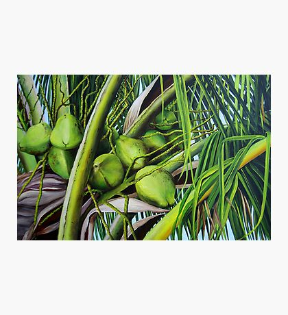 Green Coconuts from the Tropics Photographic Print