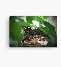 Crowded Nest ~ Baby Robins Canvas Print