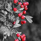 Berry Power by Evette Lisle