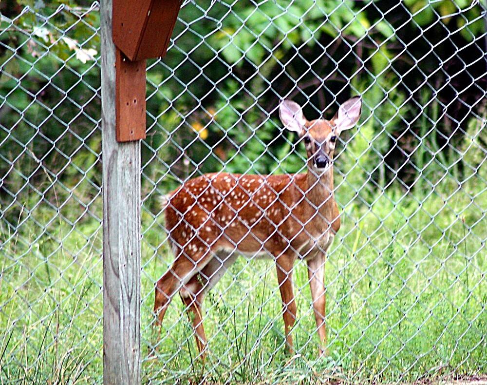 Right Outside My Fence by rasnidreamer
