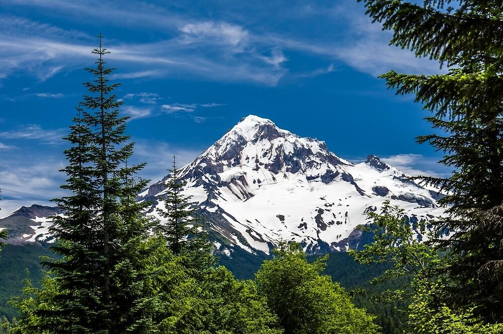 Mount Hood Framed by Fir Trees by Zigzagmtart