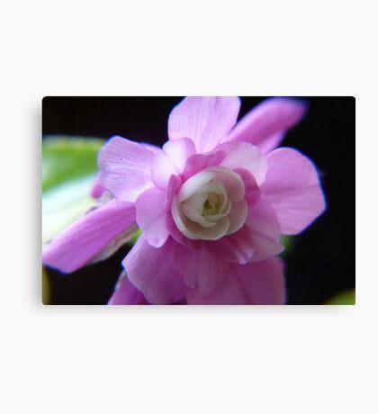 Double Impatience Flower Canvas Print