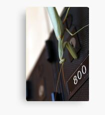 Praying Mantis collects the mail Canvas Print