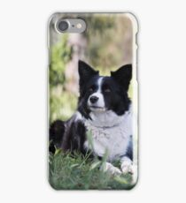 """Beautiful Border Collie.... Alley"""""""" iPhone Case/Skin"""