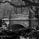 bridge, central park, nyc by tim buckley | bodhiimages