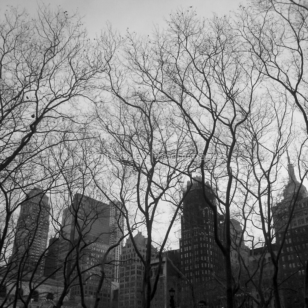 park and city, midtown, nyc by tim buckley | bodhiimages
