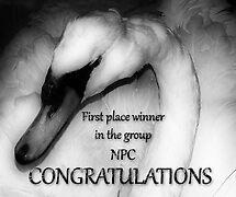 NPC banner entry by solareclips~Julie  Alexander