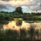 Wetlands of de Heen by Adri  Padmos