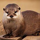 Terry the Otter by Simon Marsden