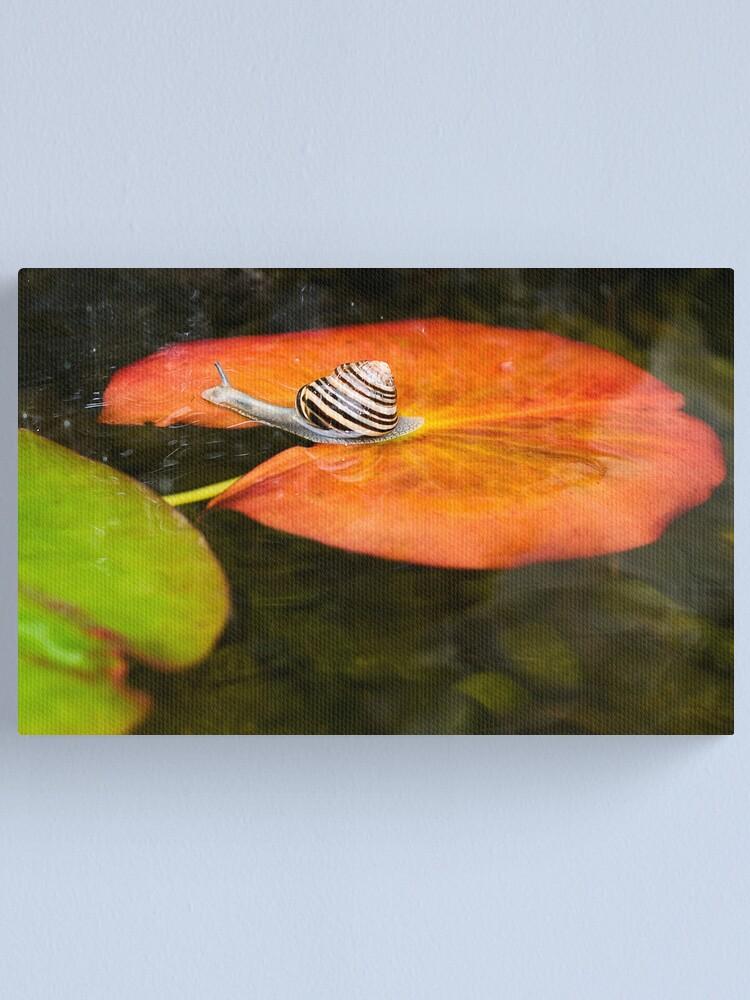 Alternate view of Snail on Lilypad Canvas Print