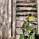 Sunny Spot by Kimberly Palmer