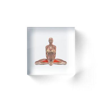 Positions de yoga musculo-squelettique