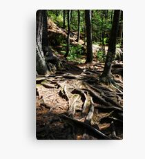 Firmly Rooted Canvas Print