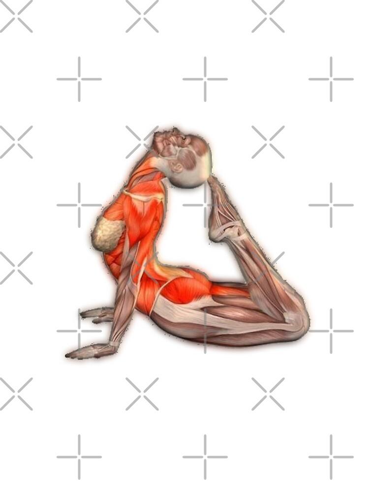 «Dessins Musculo-squelettique des positions de Yoga» par rodolphe-a