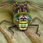 Dragonfly by Wanda Staples