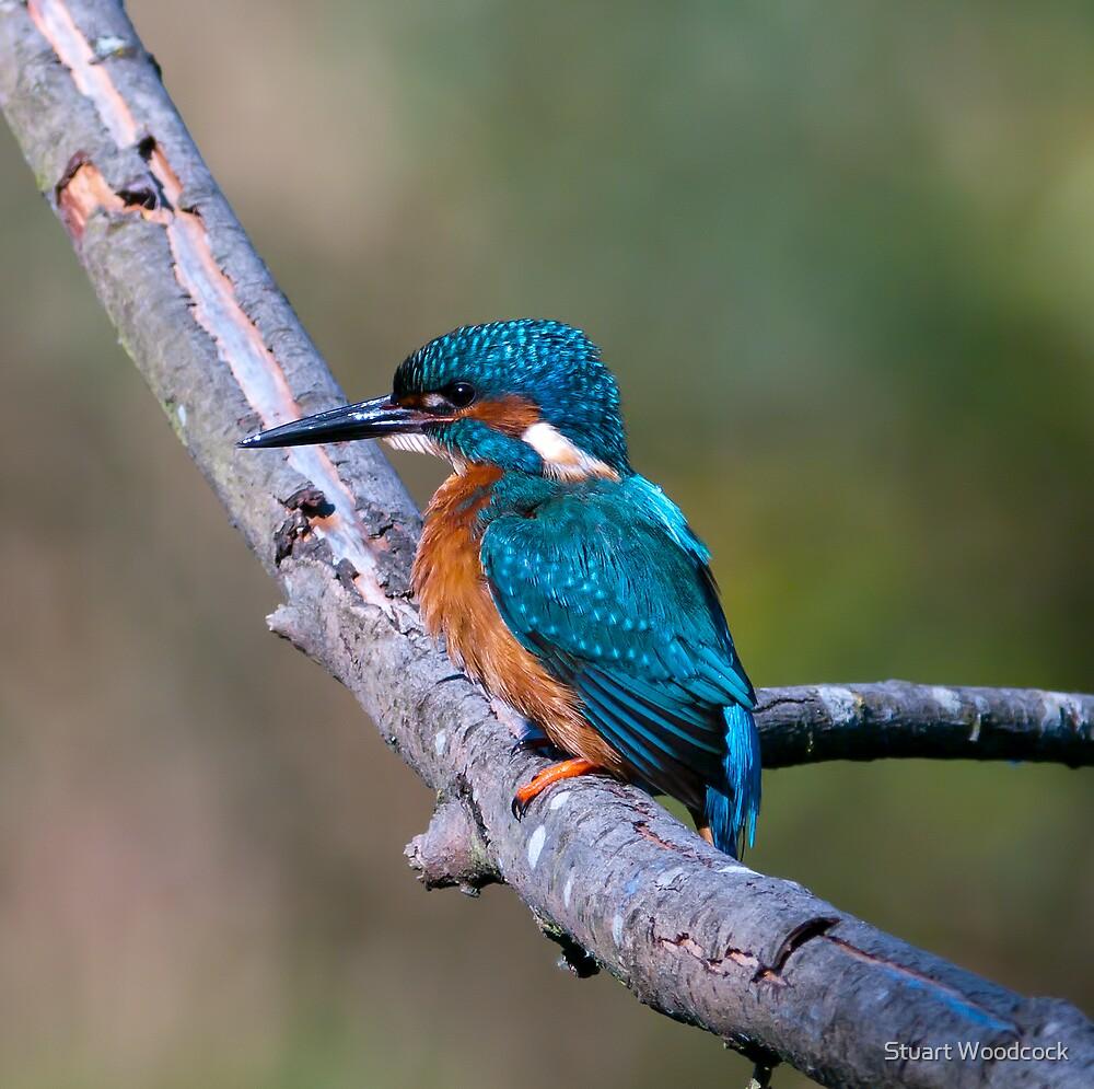 Kingfisher by Stuart Woodcock