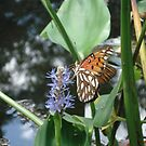 GULF FRITILLARY ON PICKEREL WEED by May Lattanzio