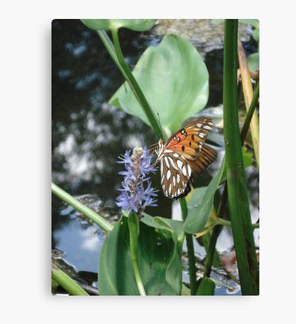GULF FRITILLARY ON PICKEREL WEED Canvas Print