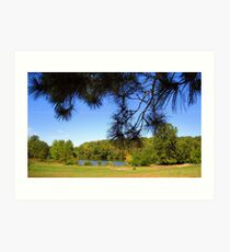 From Underneath the Pine Tree Art Print