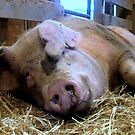 I'm a Pig by Rusty Katchmer