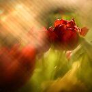 Tulip in the Spotlight by Kasia-D