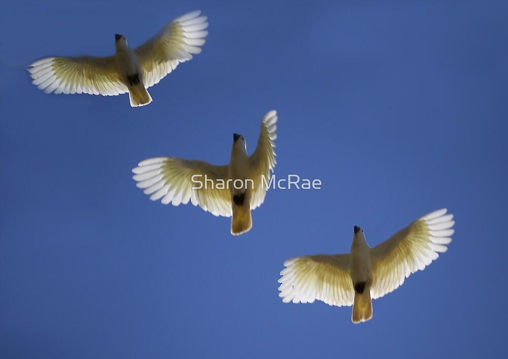 Three  Amigos by SharonD