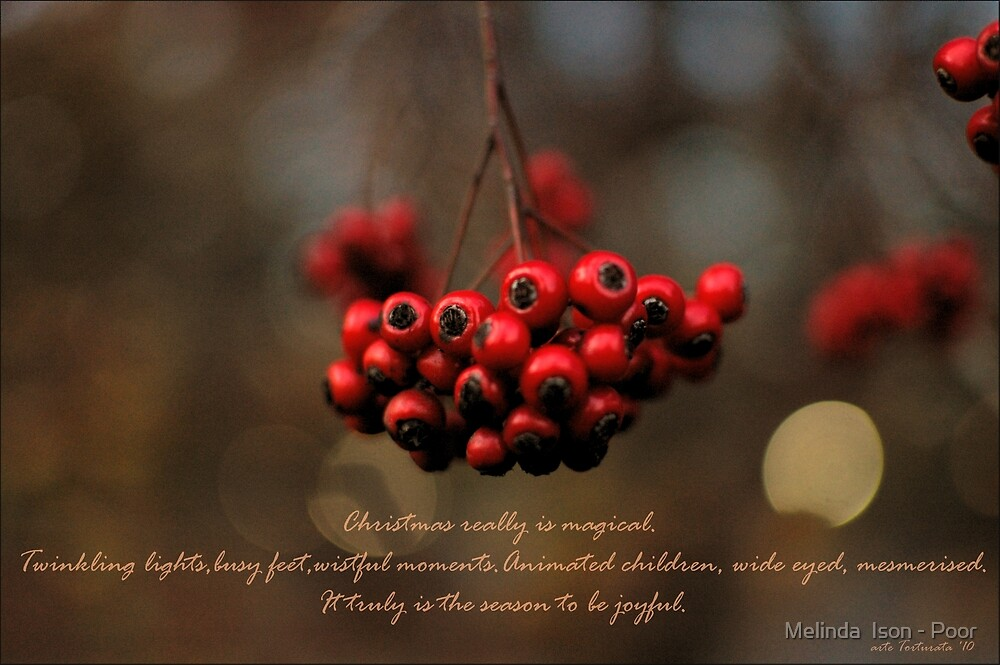 Christmas Berries in Central Park by Melinda  Ison - Poor