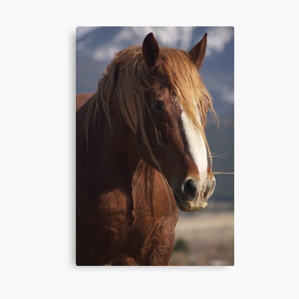 Tatanka Spirit looks on Canvas Print