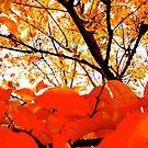orange. by Lance Anthony A.