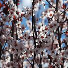 Blossom Backdrop by Catherine Davis