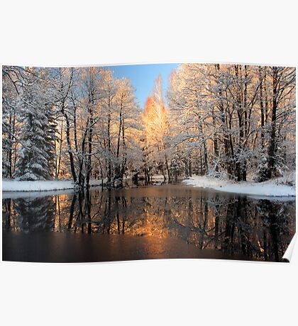 Reflection trees with sunlight Poster