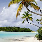 Cook Islands Palm - Aitutaki by Jenny Dean