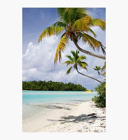 Cook Islands Palm - Aitutaki Photographic Print