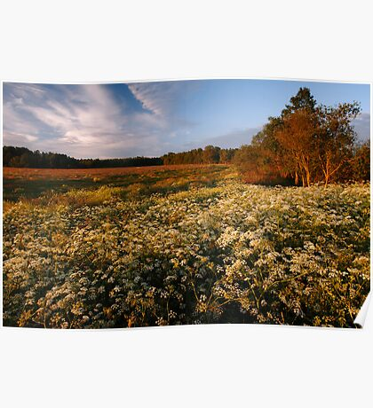 Summer meadow in countryside Poster