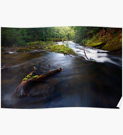 Stream in woods Poster
