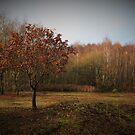 Autumn, oak and birch by Matt West