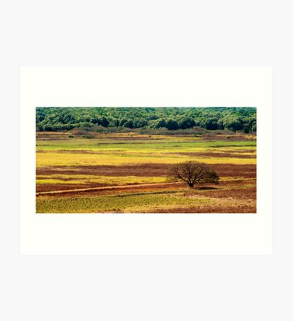 The Colours of the Land Art Print
