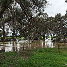 Floods at Rupanyup - Dunmunkle Creek by Jennifer Craker