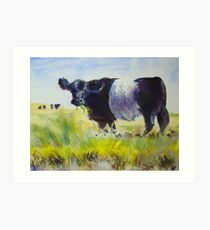 Belted Galloway Cow Painting Art Print