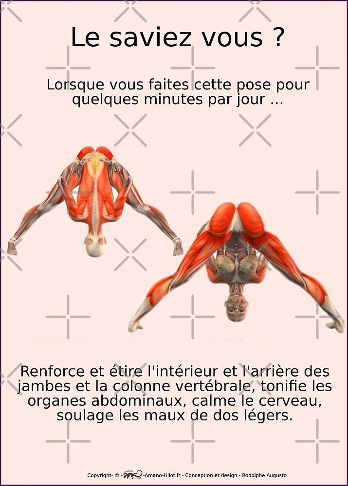 « Planches Musculo-squelettique des positions de Yoga - N°3 » par rodolphe Augusto