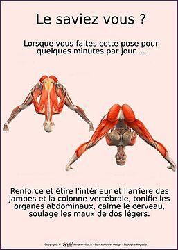 Planches Musculo-squelettique des positions de Yoga - N°3