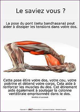 Planches Musculo-squelettique des positions de Yoga - N°4