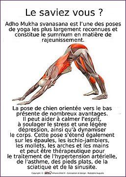 Planches Musculo-squelettique des positions de Yoga - N°5