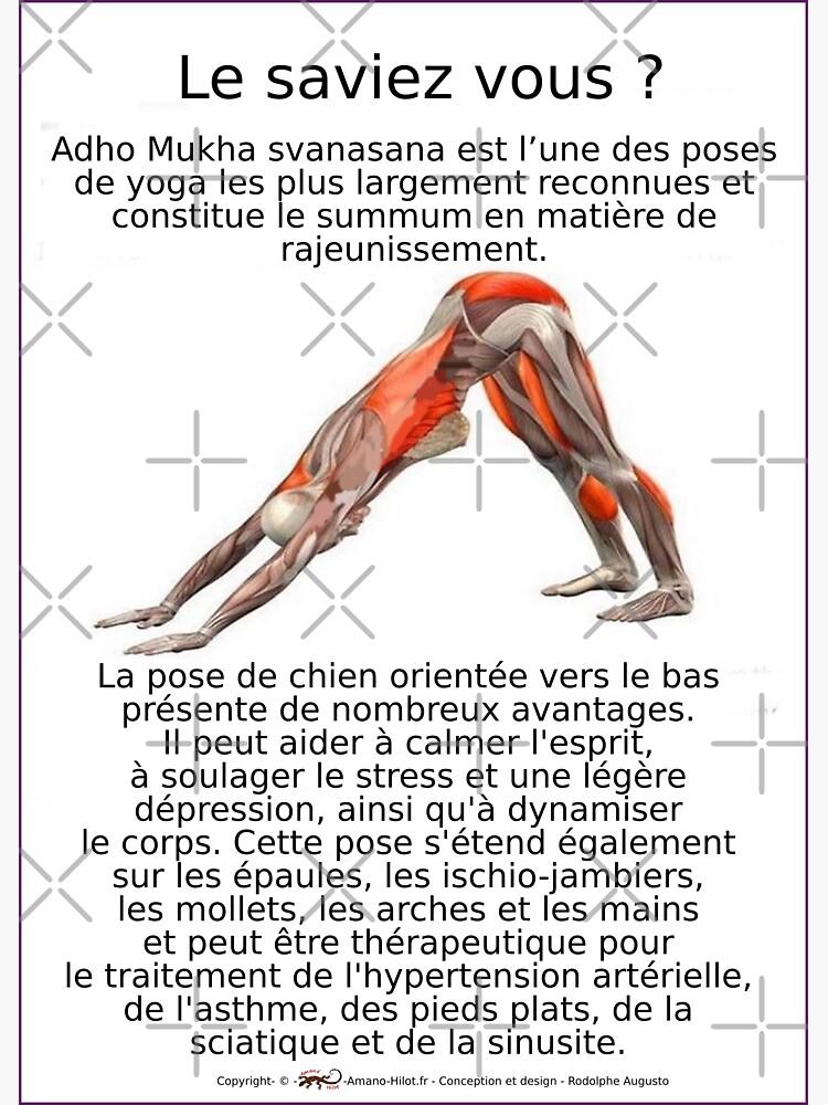 «Planches Musculo-squelettique des positions de Yoga - N°5» par rodolphe-a