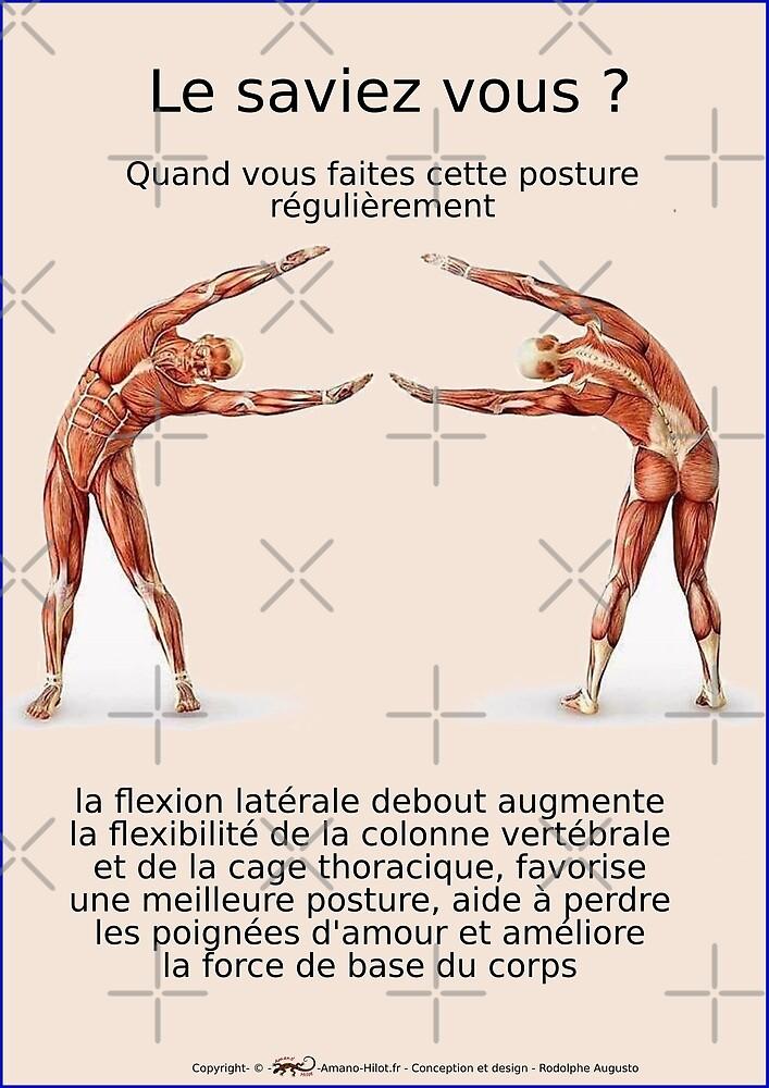 « Planches Musculo-squelettique des positions de Yoga - N°13 » par rodolphe Augusto