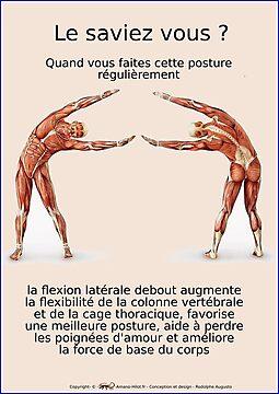 Planches Musculo-squelettique des positions de Yoga - N°13