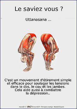 Planches Musculo-squelettique des positions de Yoga - N°14
